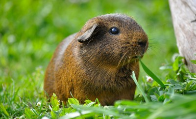 Tierschutzorganisation Peta stoppt Kleintierverkauf bei Obi