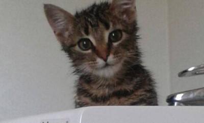 Katze aus Müllwagen gerettet