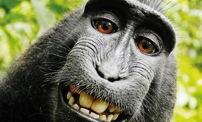PETA klagt für Urheberrechte von Tieren