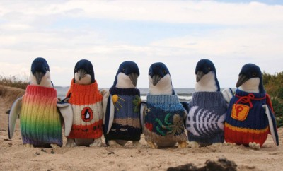 Gestrickte Pullover für Pinguine.