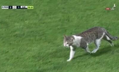 Eine Katze sorgte für eine kurze Spielunterbrechung zwischen Besiktas und Kasimpasa.