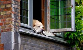 Ein Hund der aus dem Fenster guckt.