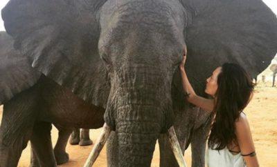 Maggie Q: Blutige Schock-Kampagne für PETA!